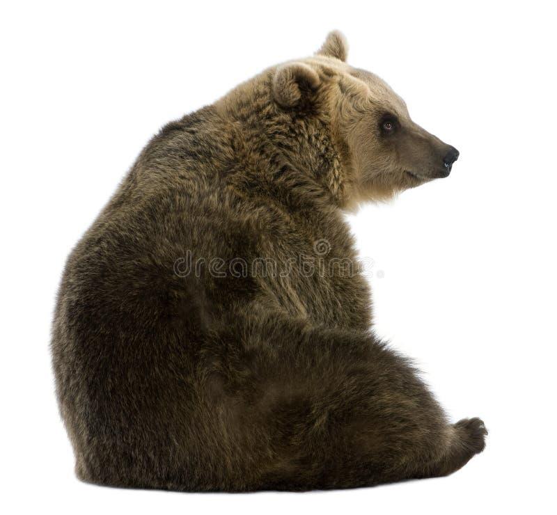 8熊棕色女性老坐的年 免版税库存图片