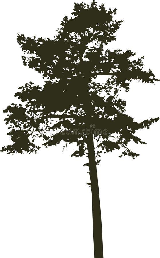 8 απομονωμένο δέντρο σκια&gamma ελεύθερη απεικόνιση δικαιώματος