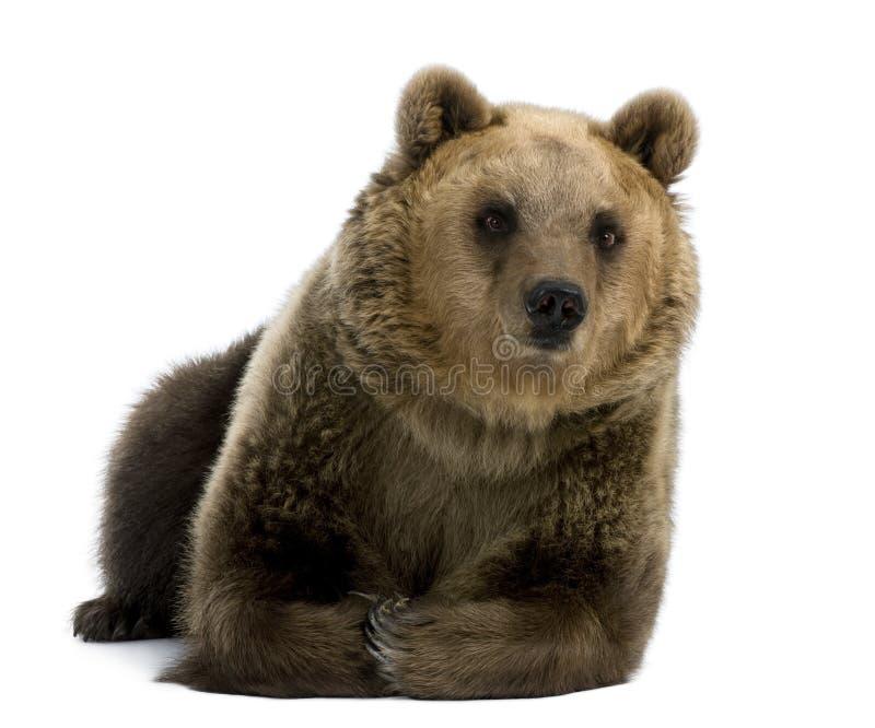 8 лет коричневой вниз женщины медведя лежа старых стоковые изображения