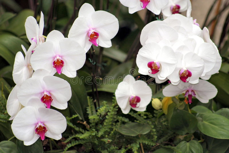 8 orchidea obrazy stock