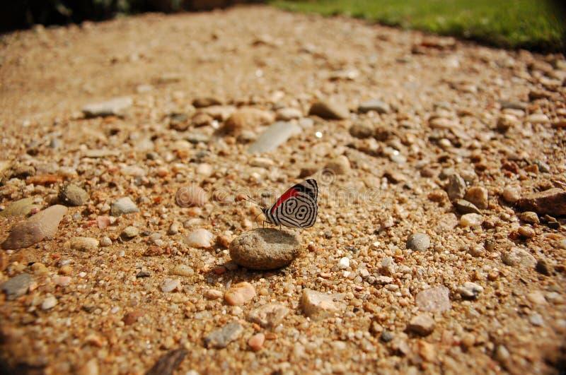 88只蝴蝶接近的草石头 免版税库存图片