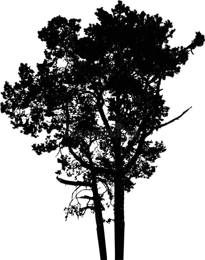 9查出的剪影结构树 库存例证