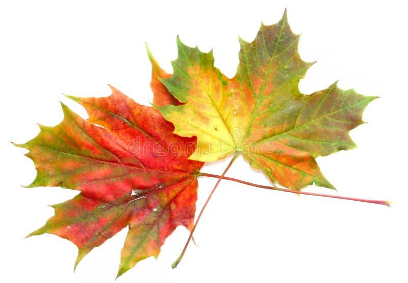 9 χρώματα φθινοπώρου Στοκ φωτογραφίες με δικαίωμα ελεύθερης χρήσης