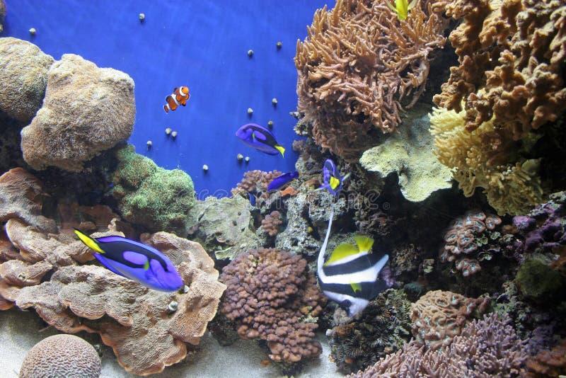 9 akwarium Monterey, obraz stock