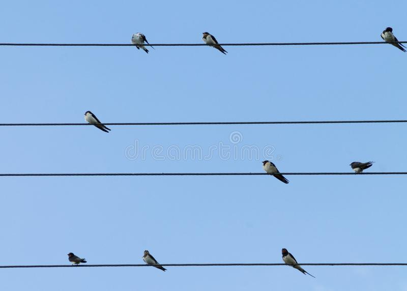 9 Birds Perched On 4 Electric Lanes Free Public Domain Cc0 Image