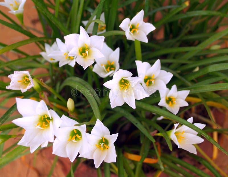 90 kwiat obrazy royalty free