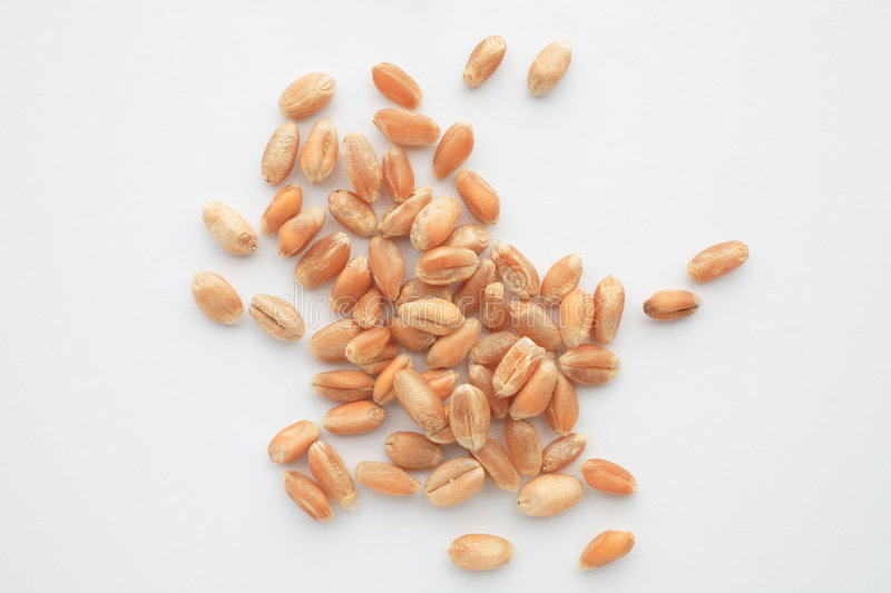 Download 932437RF stock image. Image of wheats, grains, cereal - 4106187