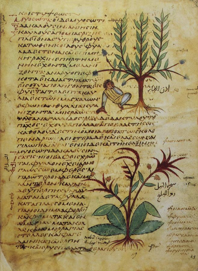Free 9th Century Uncial Writing Manuscript From Dioscorides De Materia Medica Royalty Free Stock Images - 166863069