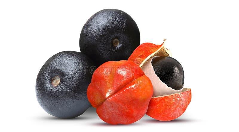 Açaí e Guaraná Frutas tropical imágenes de archivo libres de regalías
