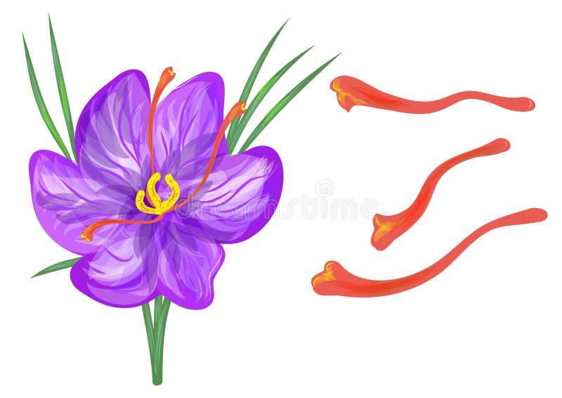 Açafrão com flor ilustração stock