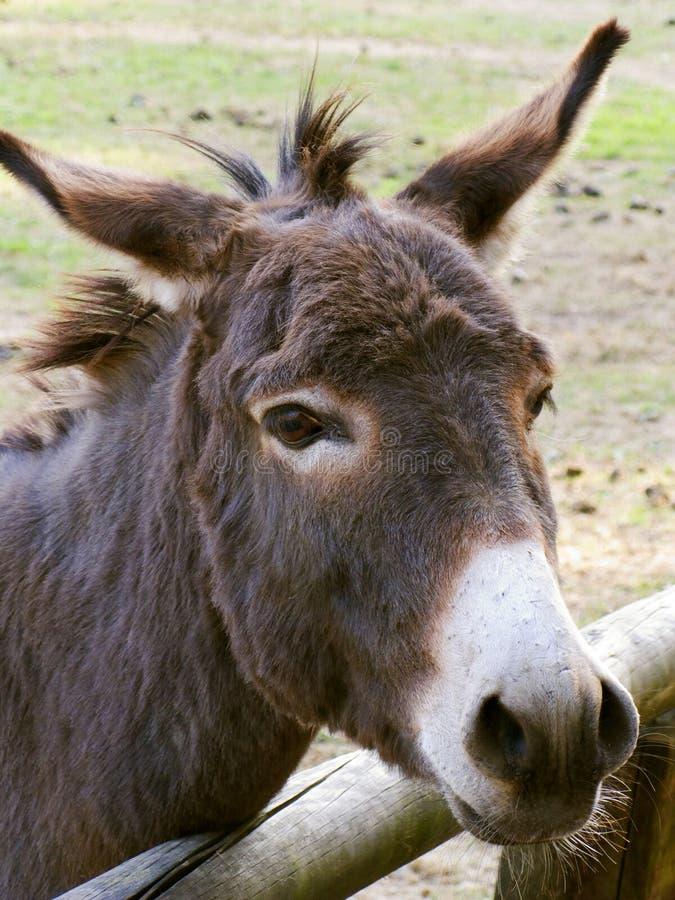 Açaime do burro fotografia de stock