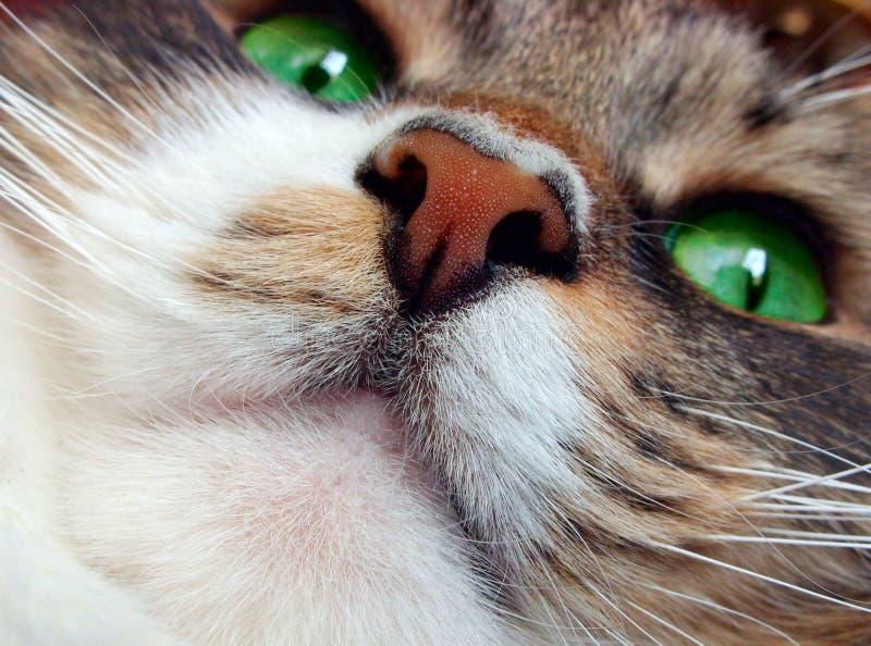 Açaime do `s do gato. imagens de stock royalty free