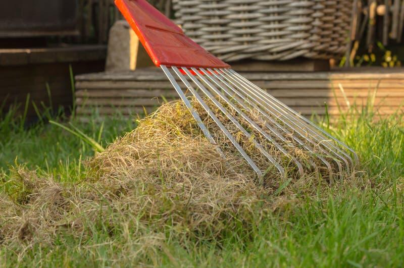 Aérant et nettoyant la pelouse avec un grand râteau photographie stock