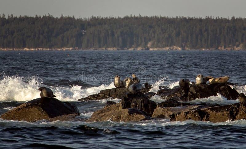 Aísla la costa del puerto Maine de la barra en ondas que se estrellan fotos de archivo libres de regalías