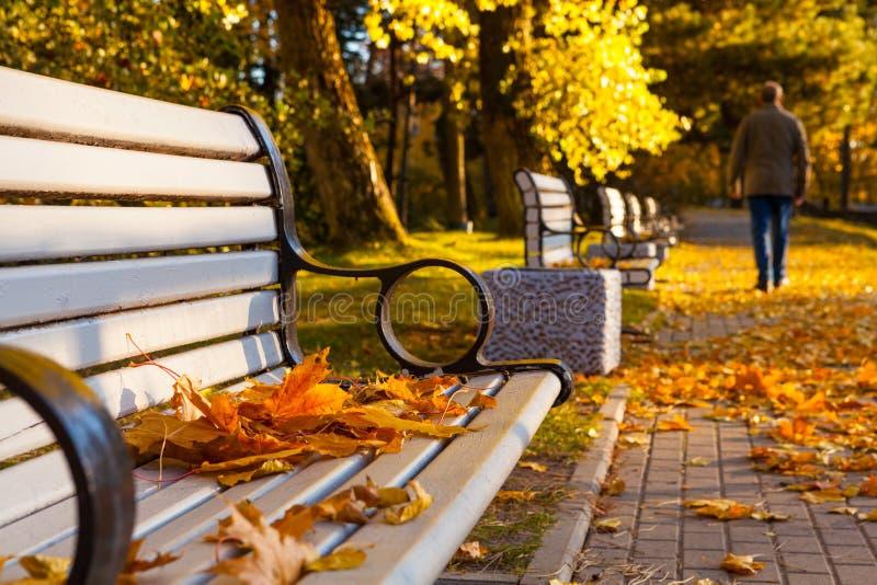Aîné en parc de ville d'automne images libres de droits