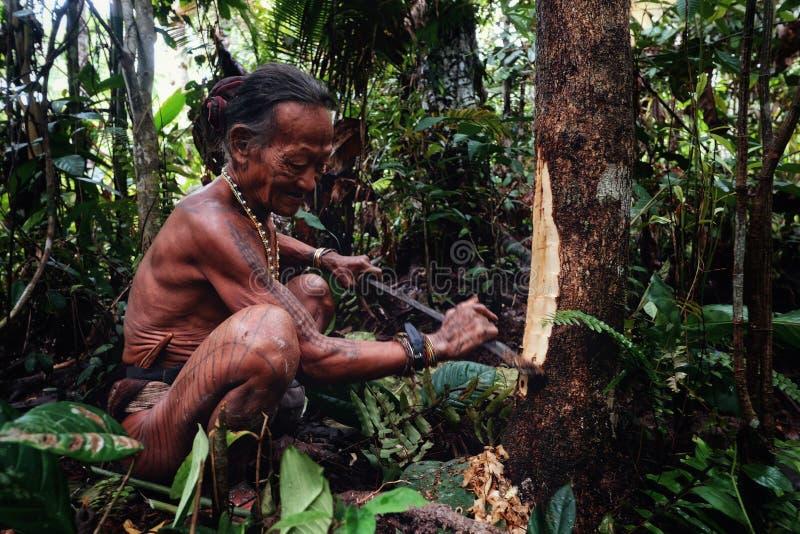 Aîné tribal Toikot rassemblant des fruits et des plantes de matériaux dans le jungl images stock