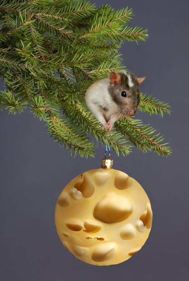 Año de una rata foto de archivo