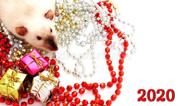 Año Nuevo 2020 Símbolo del año de la rata Decoraciones y regalos de la Navidad imágenes de archivo libres de regalías