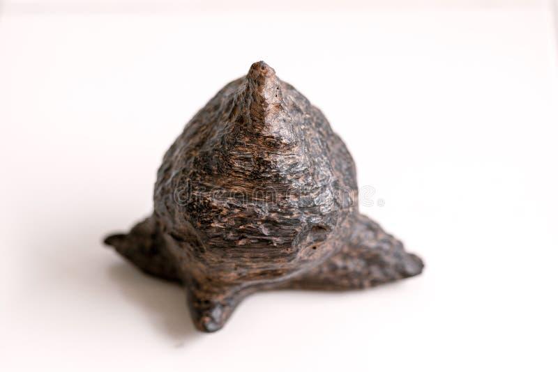 100 años del heartwood resinoso de Agarwood (crassna de Aquilaria) imagen de archivo