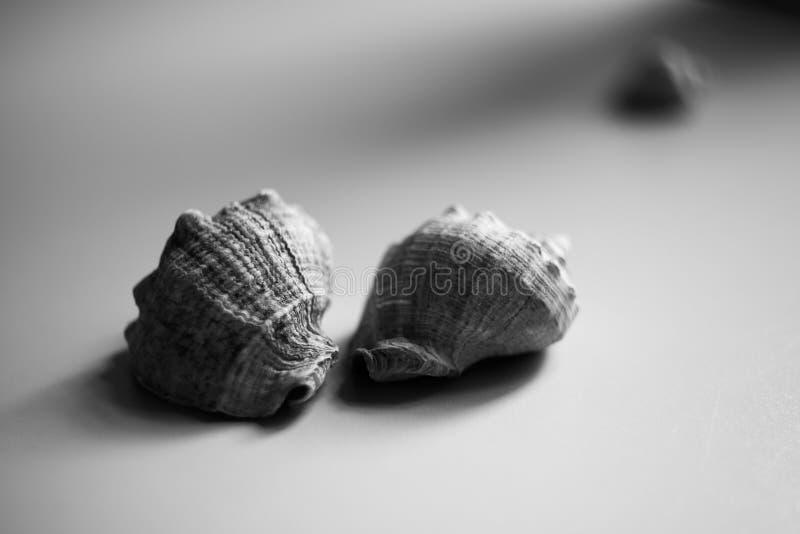 Aún vida blanco y negro con las cáscaras foto de archivo