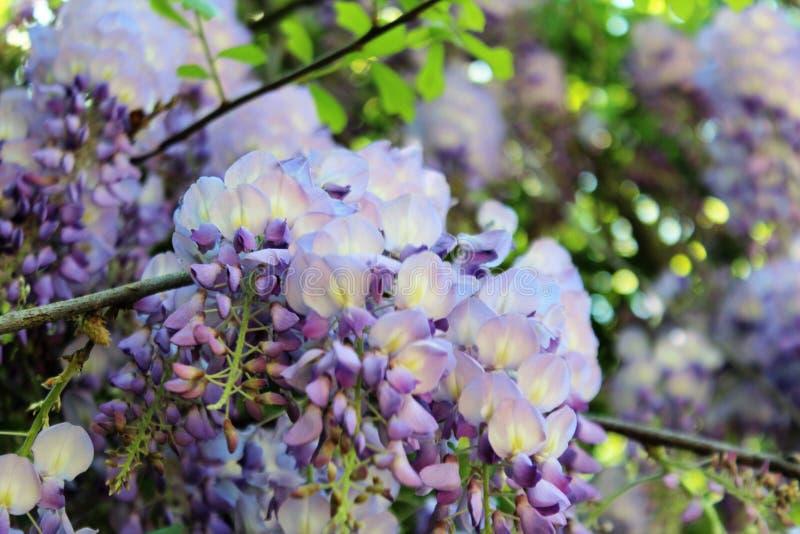 Żałość kwiaty obraz royalty free