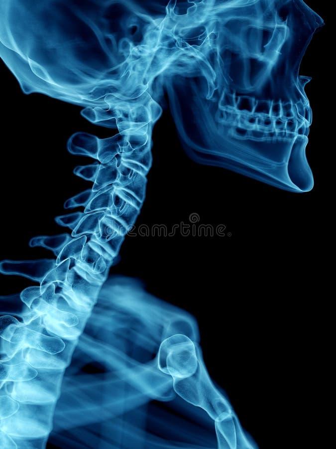 a供以人员子宫颈脊椎 库存例证