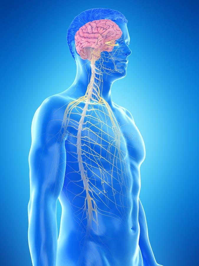 a供以人员神经系统 库存例证
