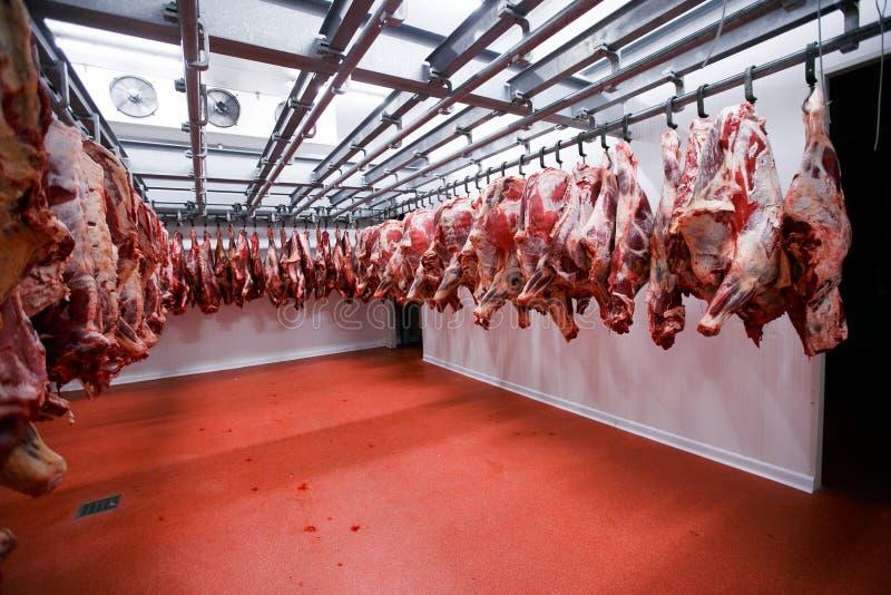 a侧向看法连续安排了在肉产业的一个大冰箱垂悬的一半牛肉大块新鲜 库存照片