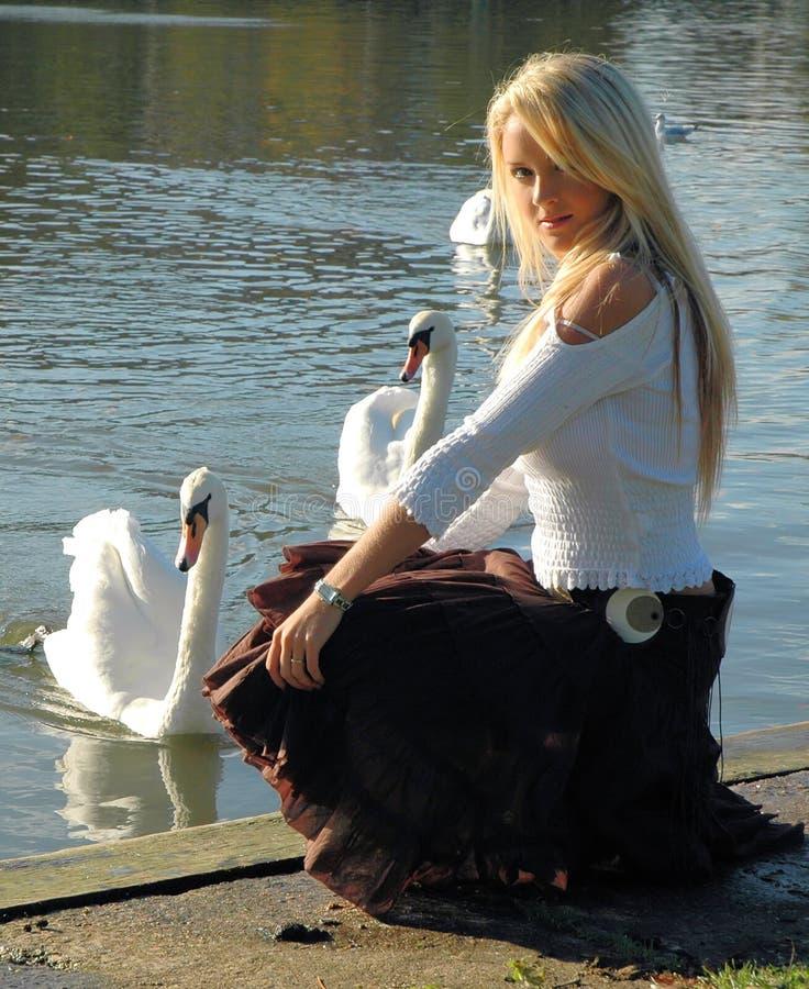 Free A Beautiful Swan Royalty Free Stock Photo - 338955