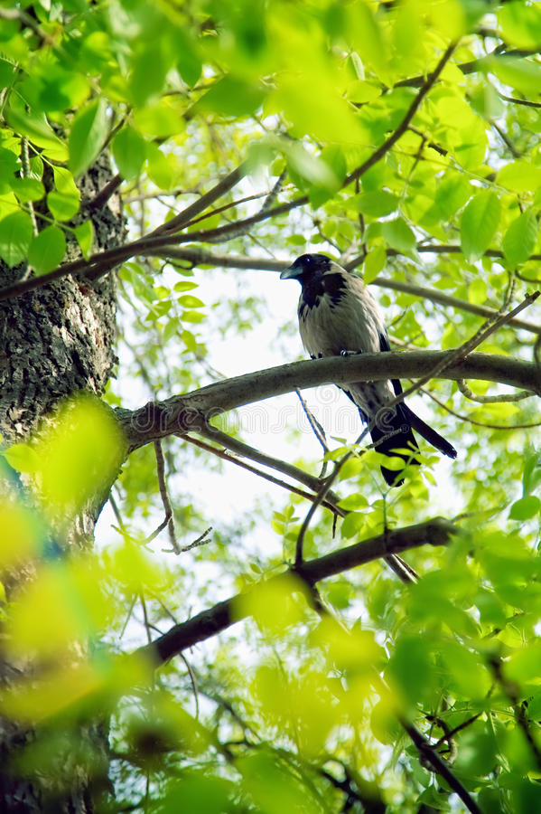 Free A Bird Sitting On A Branch Stock Image - 10014471
