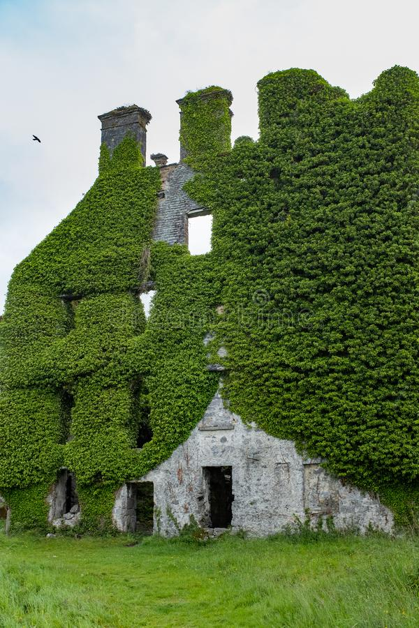 Free A Close Up Front View Of The Spectacular And Magical Ivy Clad Castle That Has Been Left Abandoned And Left To The Forces Royalty Free Stock Photo - 149708645