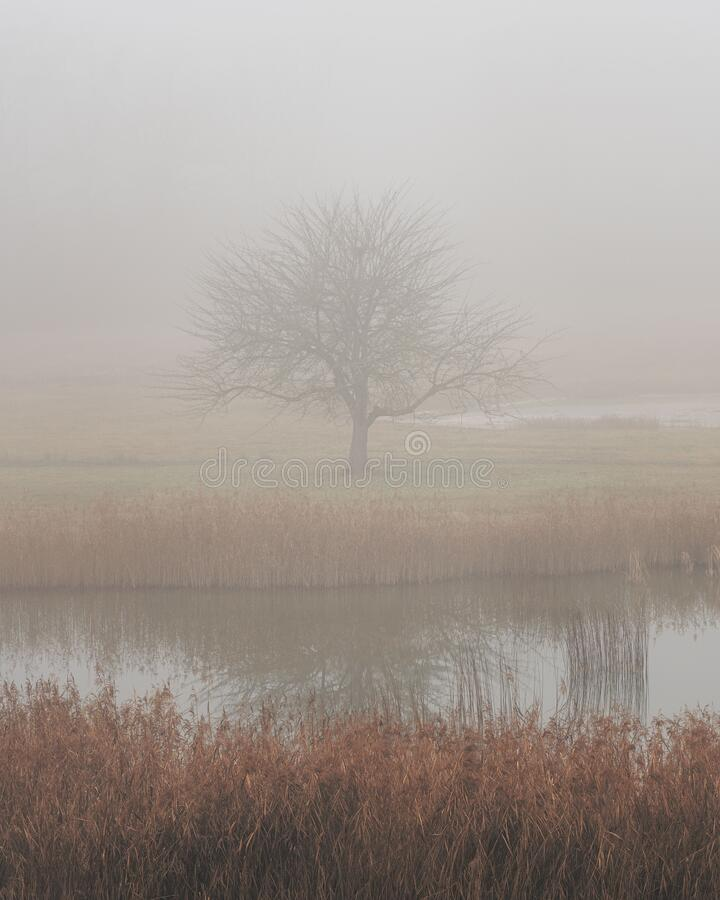 Free A Dark, Misty And Mysterious Winterscape Scene Tree, Lake Stock Photos - 203091083