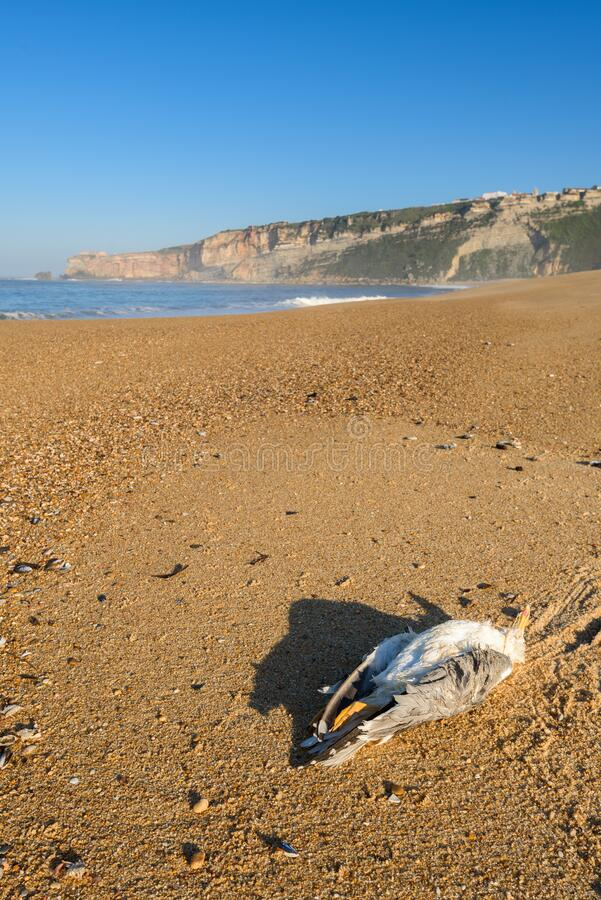 Free A Dead Seagull On The Beach Royalty Free Stock Photos - 184717418