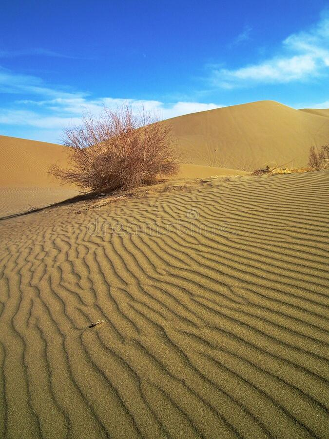 Free A Dry Plant In Sand Dunes Of Desert Stock Image - 170910311
