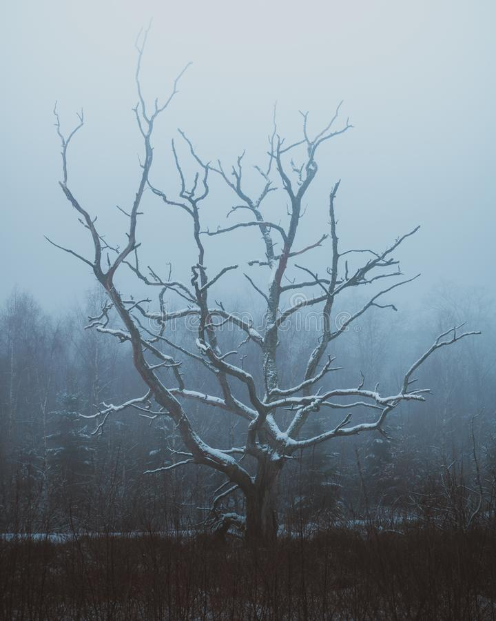 Free A Frozen Old Tree In North Zealand, Denmark Stock Image - 141212141