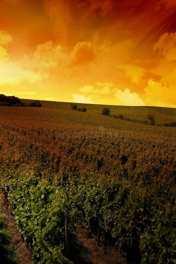 Free A German Vineyard Near The Rhe Stock Image - 3041991
