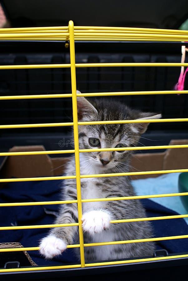 Free A Kitten. Stock Photography - 2664362