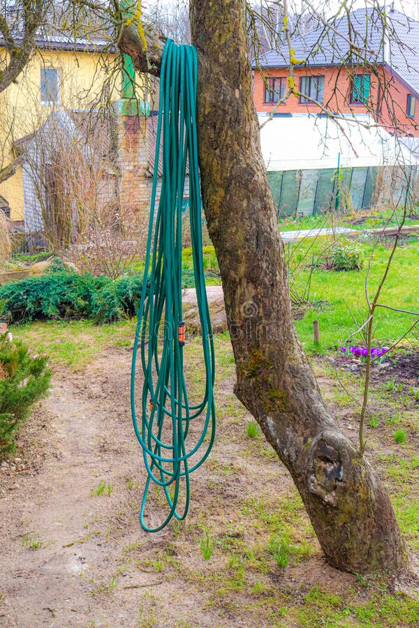 Free A Long Garden Hose Hangs In A Tree And Is Ready To Be Used For Garden Watering Stock Photography - 177338322