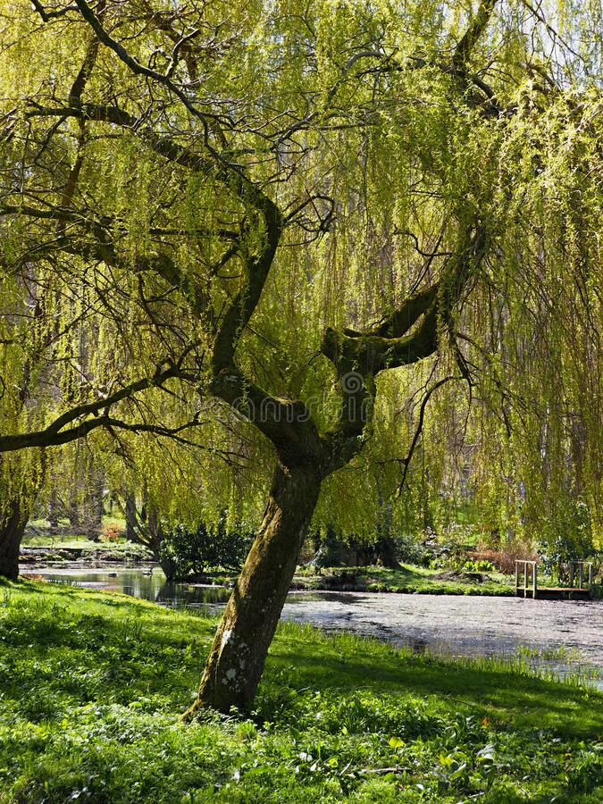 Free A Magical Park Full Of Trees And Flowers-Bodnant Garden Is A National Trust Property Near Tal-y-Cafn, Conwy, Wales Stock Images - 216258294