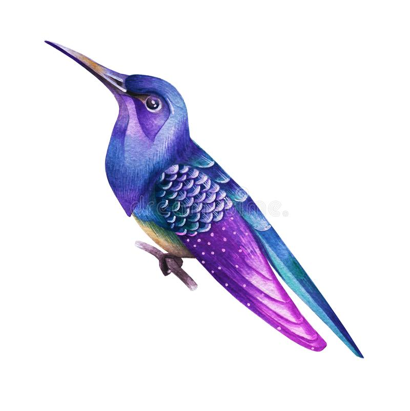 Free A Purple Bird With A Long Beak. Watercolor Royalty Free Stock Photos - 99962598