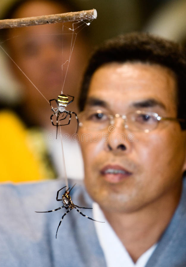 Free A Referee Watching Two Spiders Fight Stock Photography - 12913882