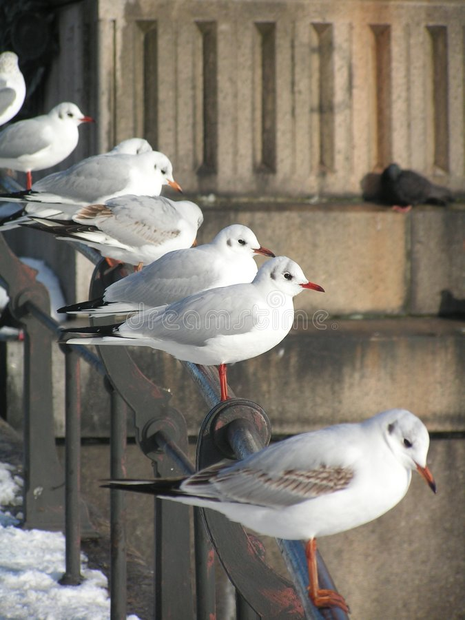 Free A Row Of Seagulls Stock Image - 668371