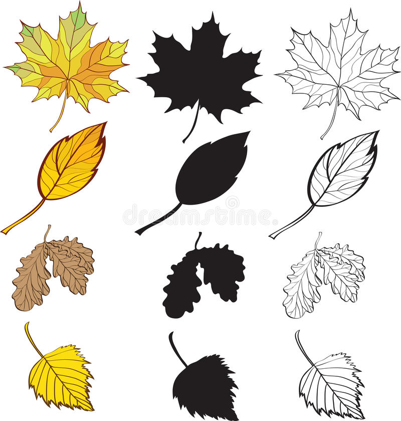 Free A Set Of Maple And Birch Leaves Royalty Free Stock Photography - 16865307