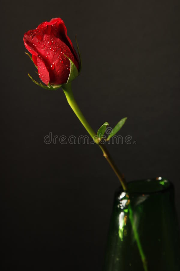 Free A Single Stemmed Red Rose In A Green Vase Royalty Free Stock Images - 13226469