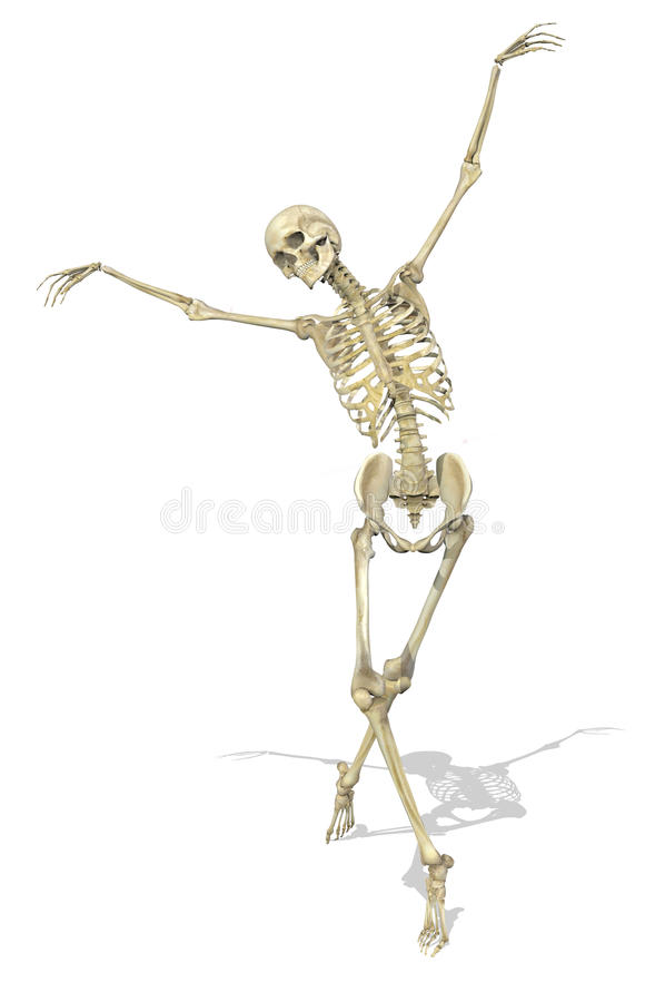 Free A Skeleton Takes A Graceful Pose Stock Image - 11534571