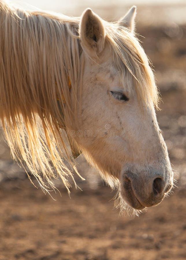 Free A Sleepy Horse Stock Photography - 23062902