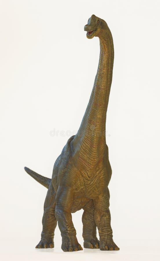 Free A Tall Brachiosaurus Dinosaur, Or Arm Lizard Stock Photography - 36883492