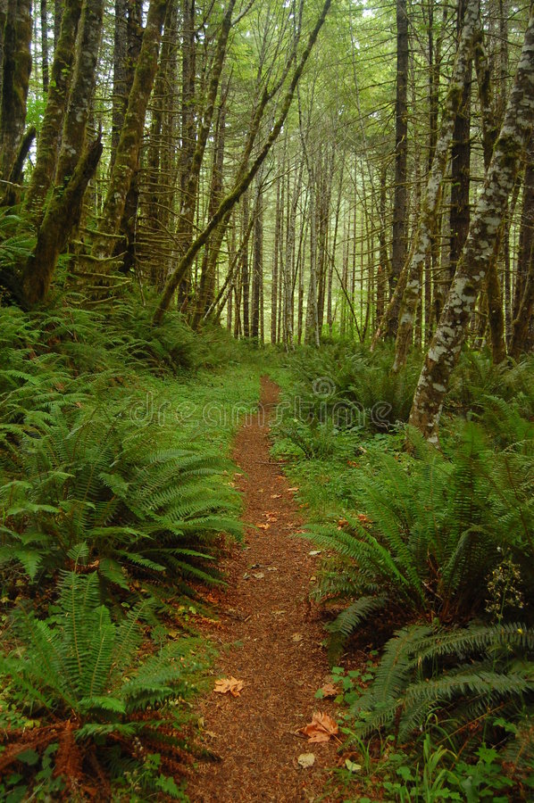 Free A Trail Through The Woods Royalty Free Stock Photo - 5678955