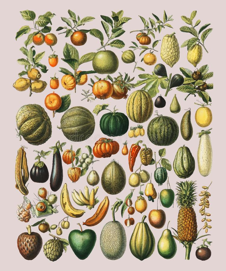 Free A Vintage Illustration Of A Wide Variety Of Fruits And Vegetables Royalty Free Stock Photo - 126681115