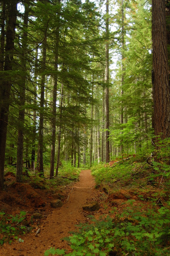 Free A Walk Through The Woods Stock Images - 5685444